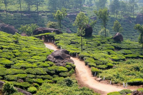Poetry Teatime - Tea in India